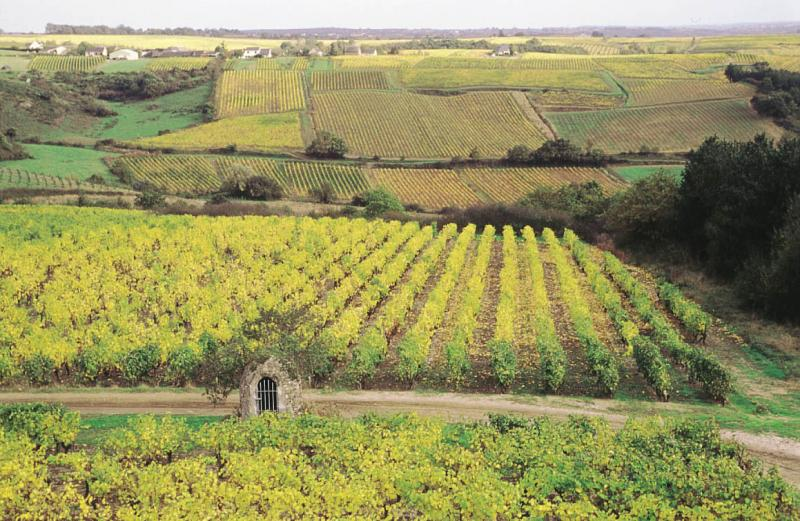 Circuit Le Layon  Entre Loire Et Vignes